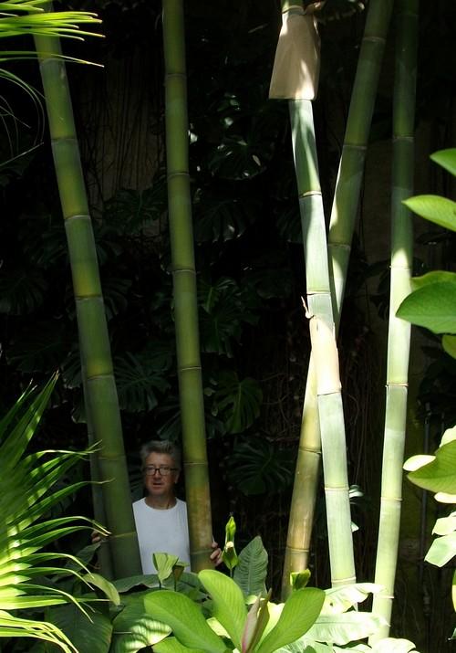 superschnell wachsender bambus sichtschutz im garten ebay. Black Bedroom Furniture Sets. Home Design Ideas